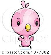 Pink Chicks