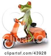 Custom Frogs 2