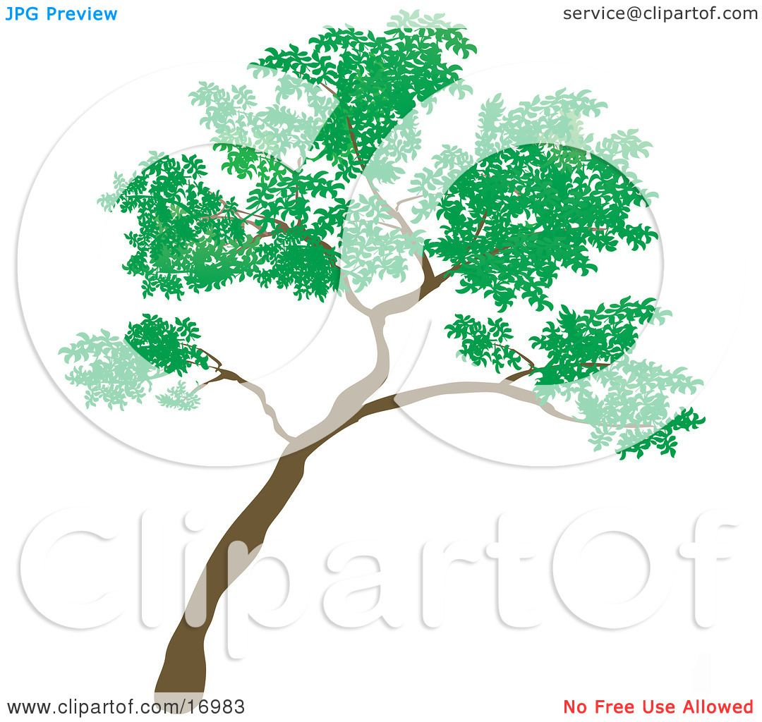 Big Green Tree Leaning to the Right Clipart Illustration by ...