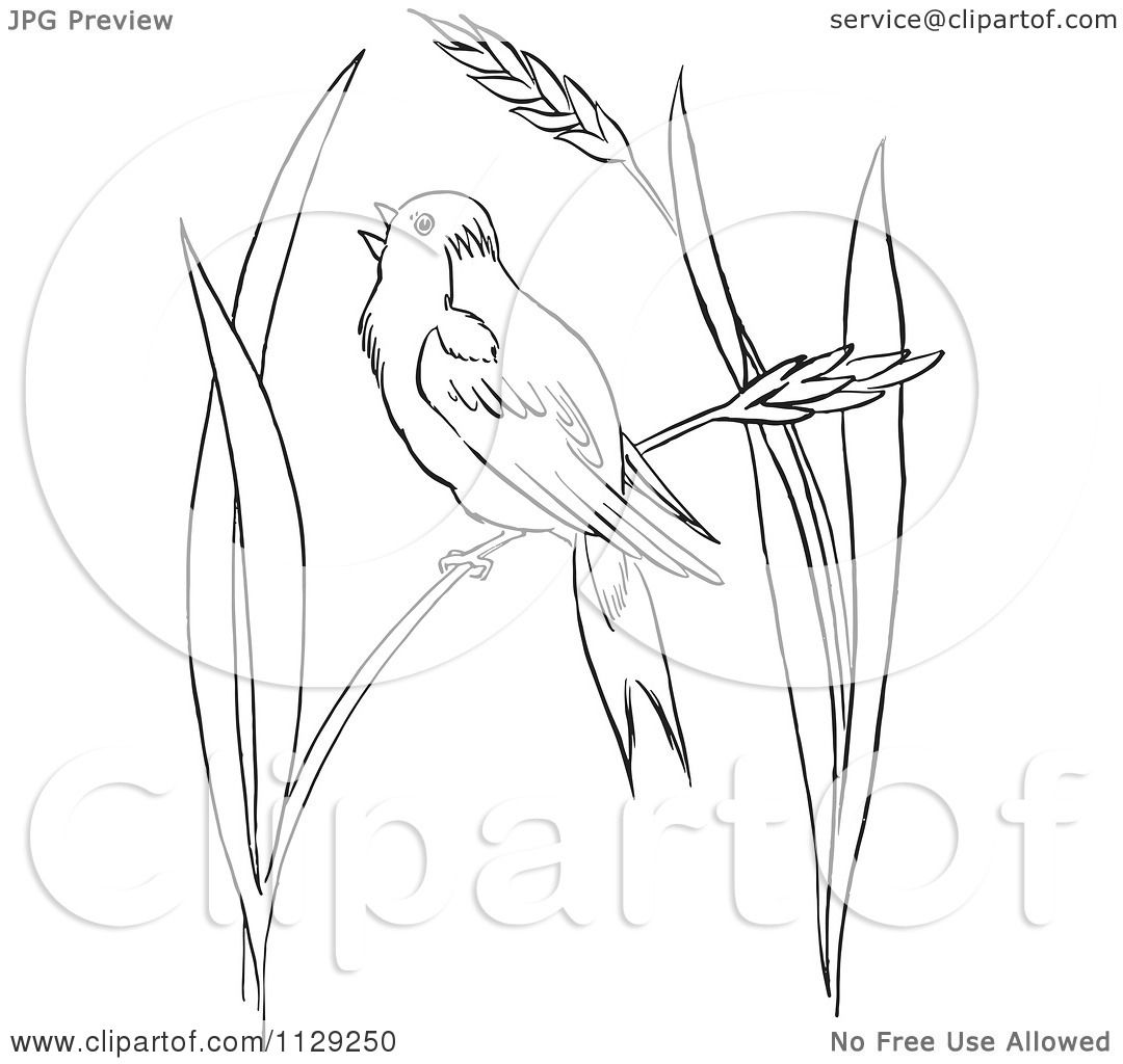 royalty free rf clipart of coloring pages illustrations vector