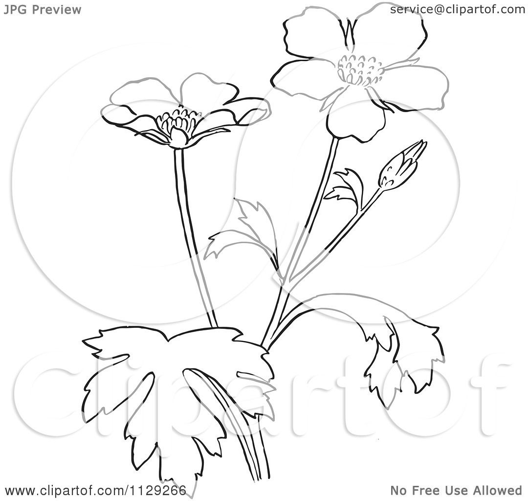 cartoon clipart of an outlined buttercup flower plant black and