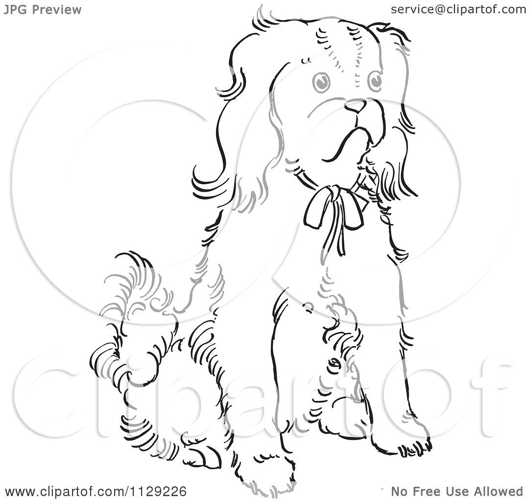 Cartoon Clipart Of An Outlined Cavalier King Charles Spaniel Dog Sitting