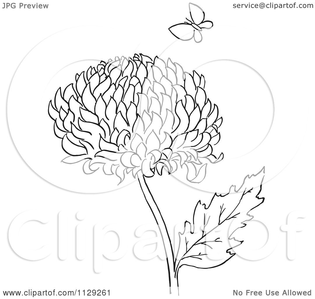 Cartoon Clipart Of An Outlined Chrysanthemum Flower And Butterfly ...