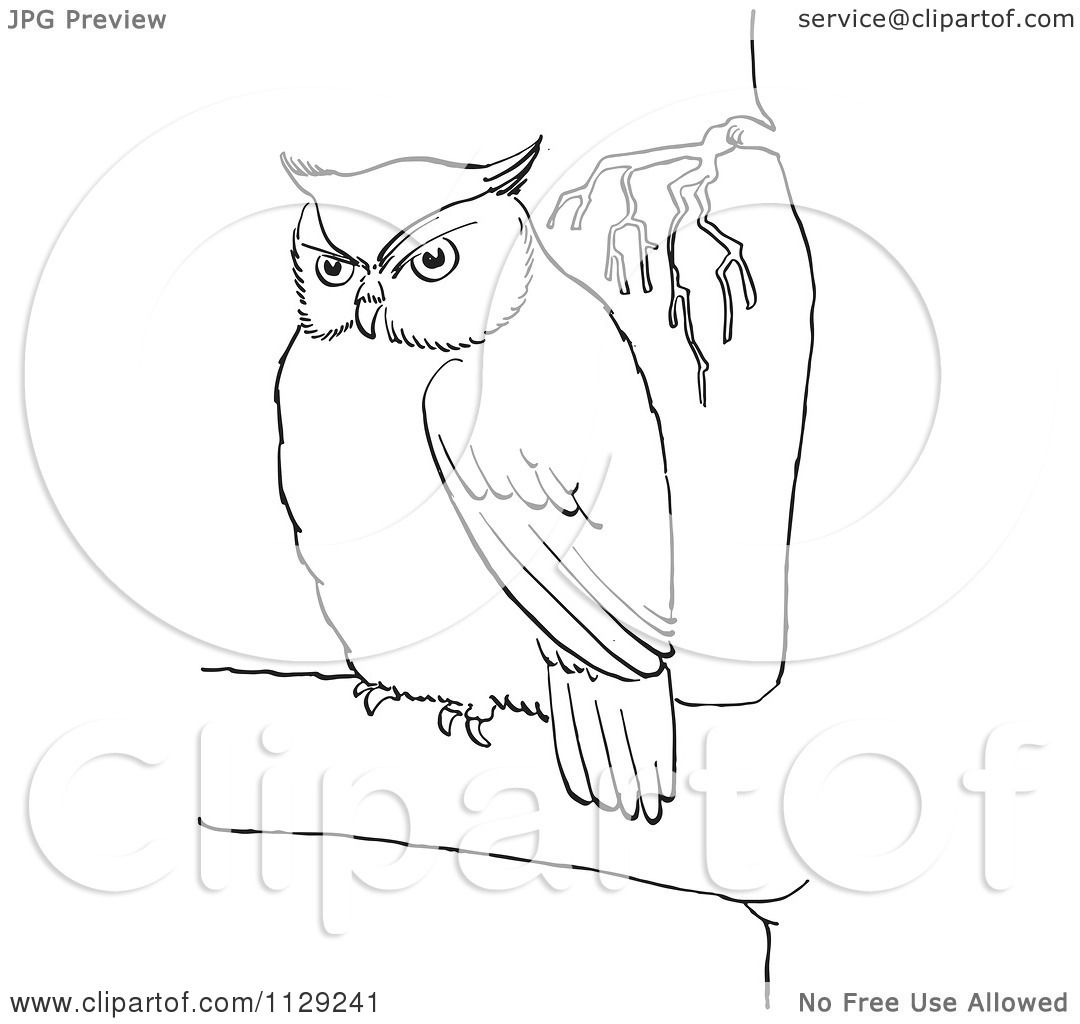 cartoon clipart of an outlined chubby owl in a tree black and