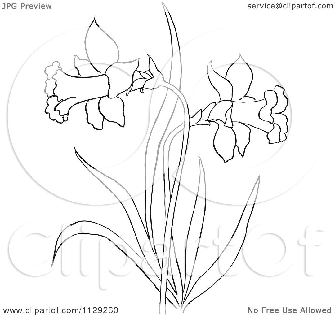 Cartoon Clipart Of An Outlined Dandelion Flower Plant Black And