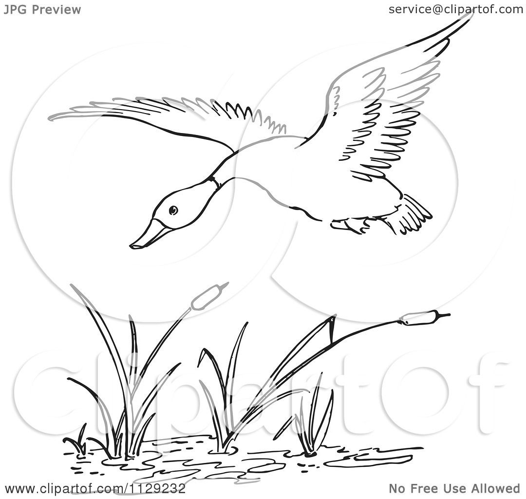 cartoon clipart of an outlined duck flying over cattails in a pond black and white vector. Black Bedroom Furniture Sets. Home Design Ideas