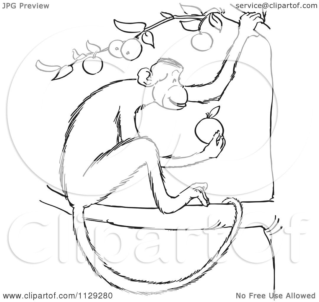 cartoon clipart of an outlined monkey eating in an apple tree