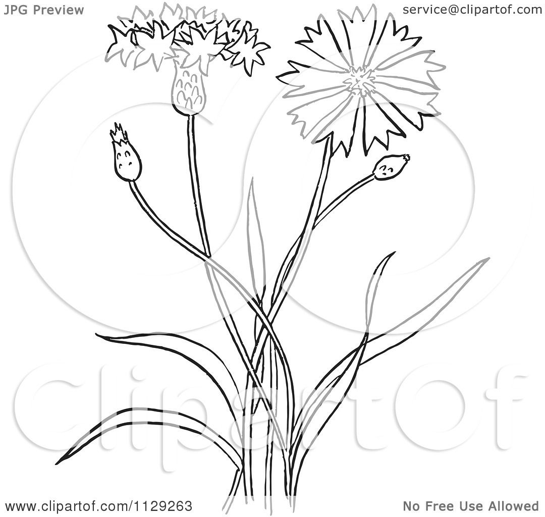 cartoon clipart of an outlined outlined bachelors buttons flower