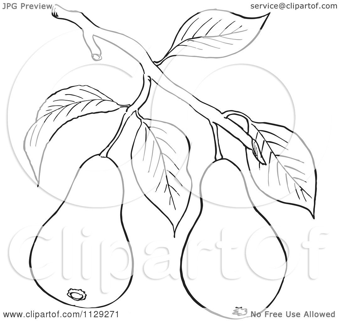 Cartoon Clipart Of An Outlined Pear Tree Branch With Fruits