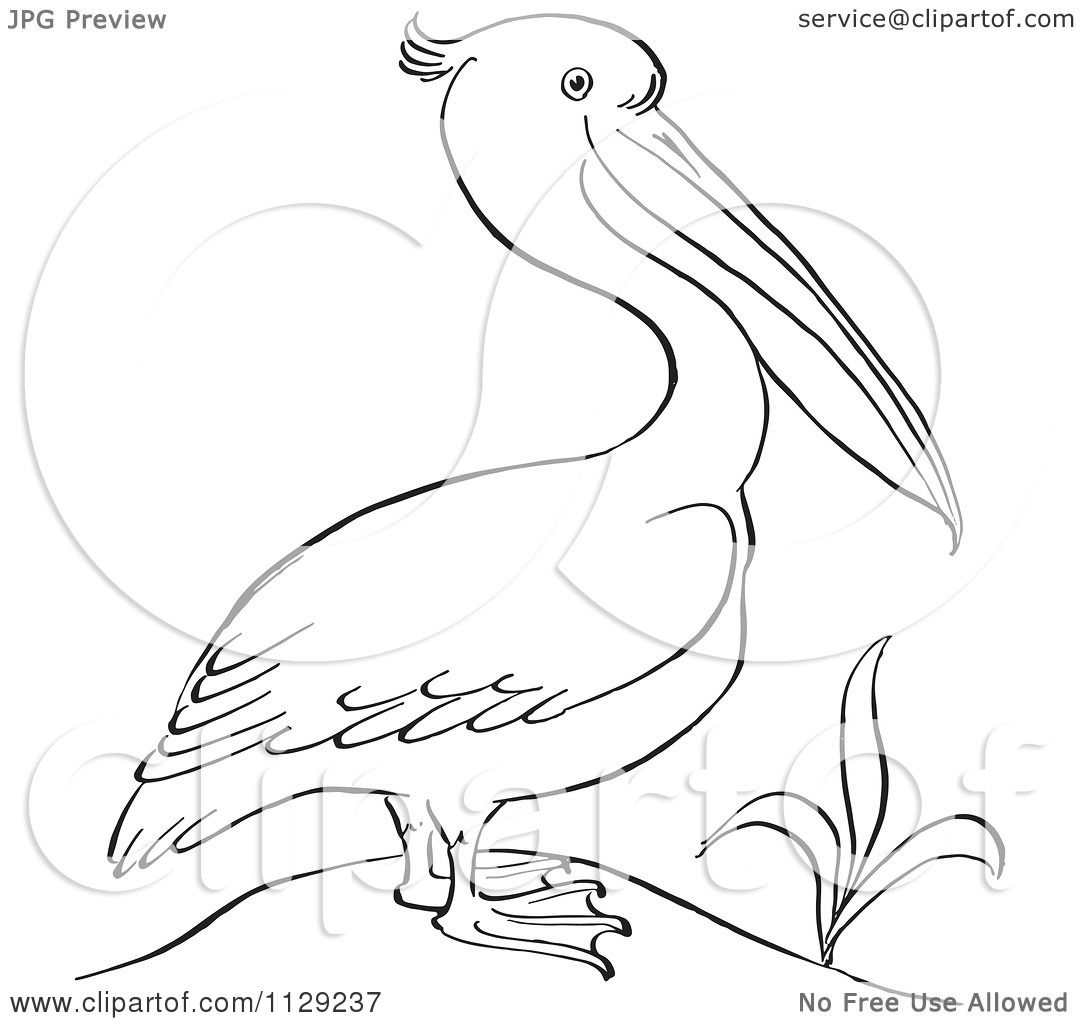 Cartoon Clipart Of An Outlined Pelican By A Plant - Black And White Vector Coloring -2380