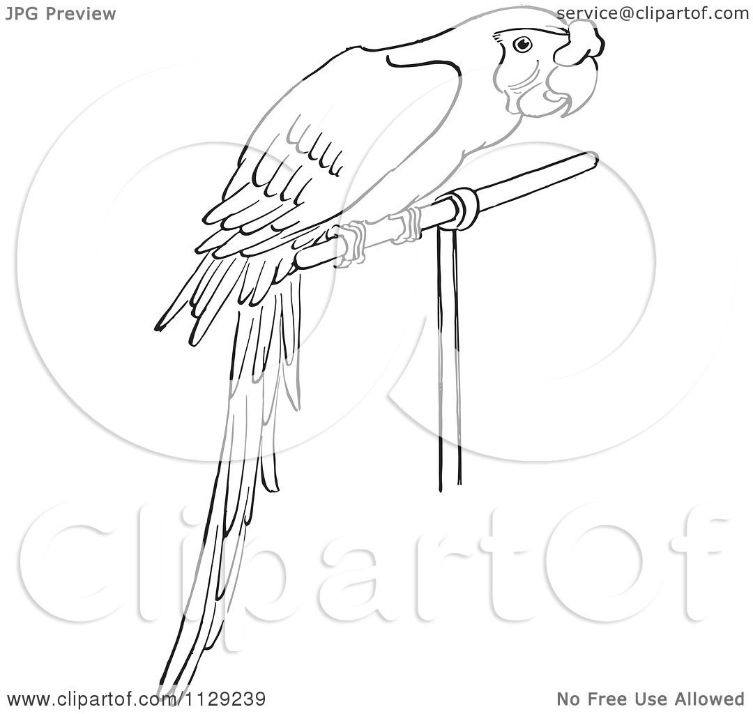 Flying Macaw Coloring Page Coloring Page by Picsburg