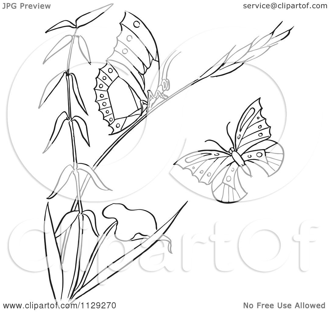 Cartoon Clipart Of An Outlined Plant With Butterflies ...