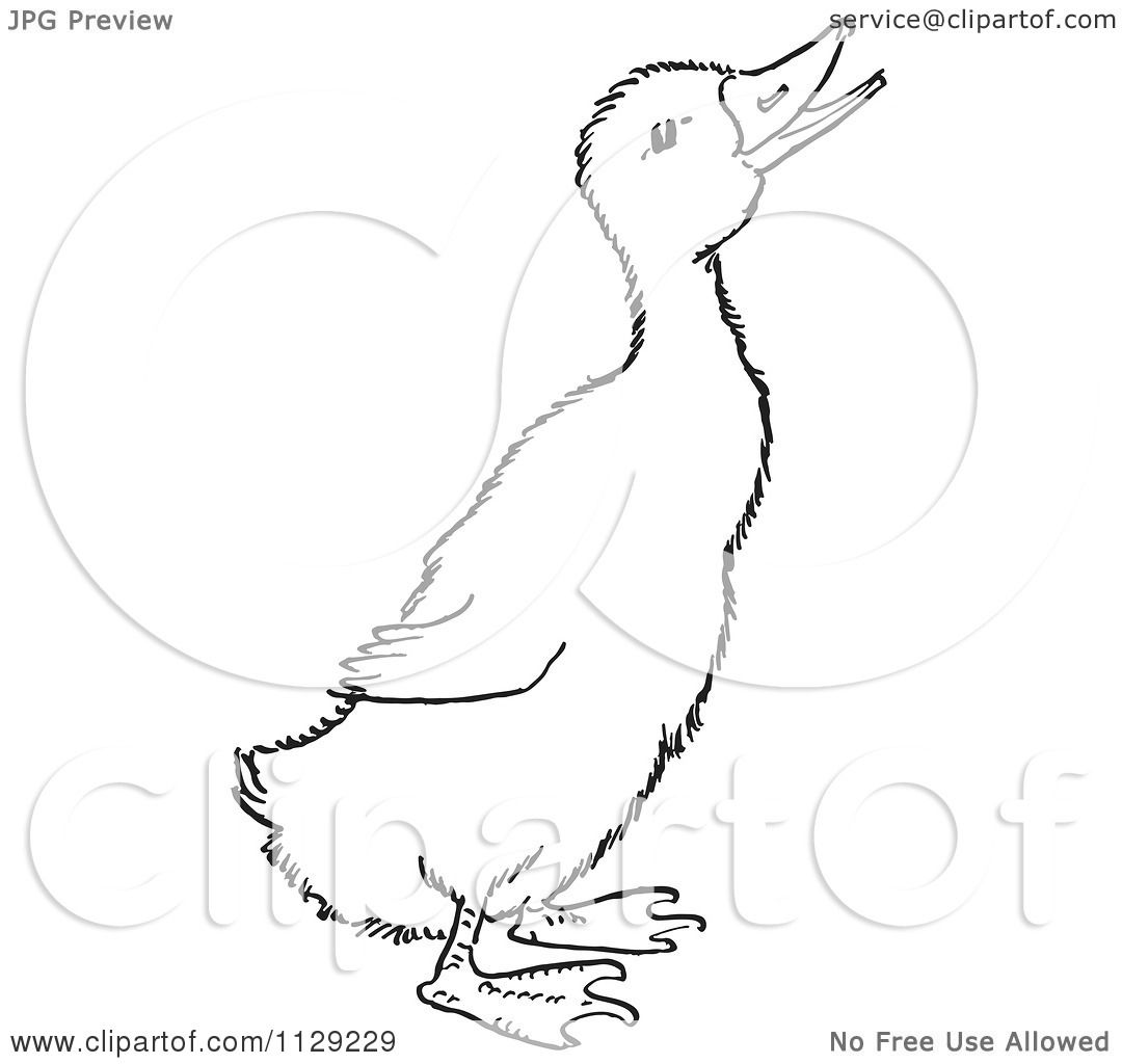 cartoon clipart of an outlined quaking duckling black and white