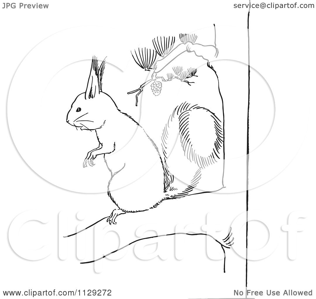 cartoon clipart of an outlined squirrel on a pine tree branch
