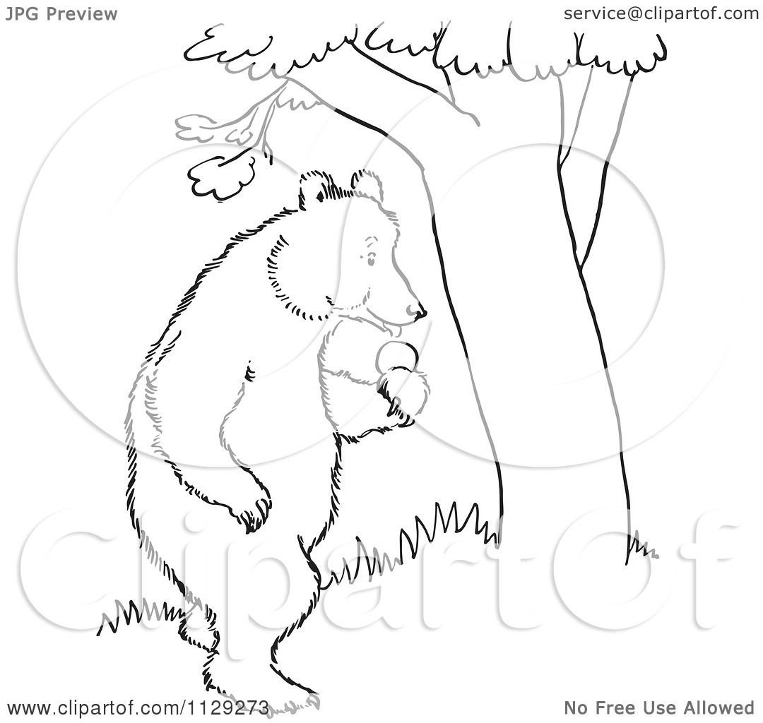 Cartoon standing bear coloring pages ~ Cartoon Clipart Of An Outlined Standing Bear With Apples ...