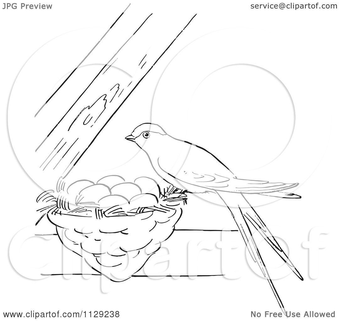 Cartoon Clipart Of An Outlined Swallow On Its Nest Between