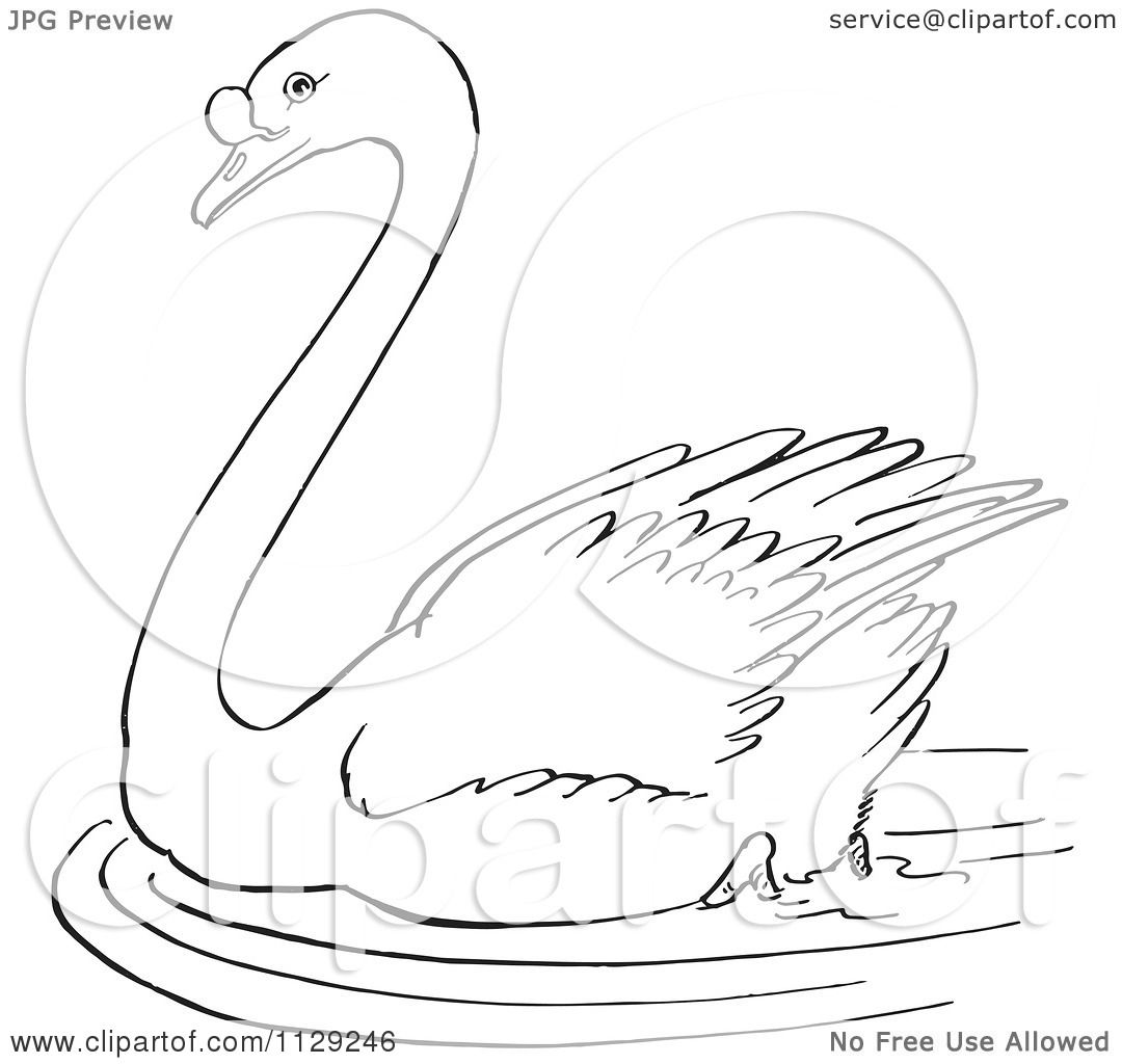 trumpeter swan coloring pages - photo#21
