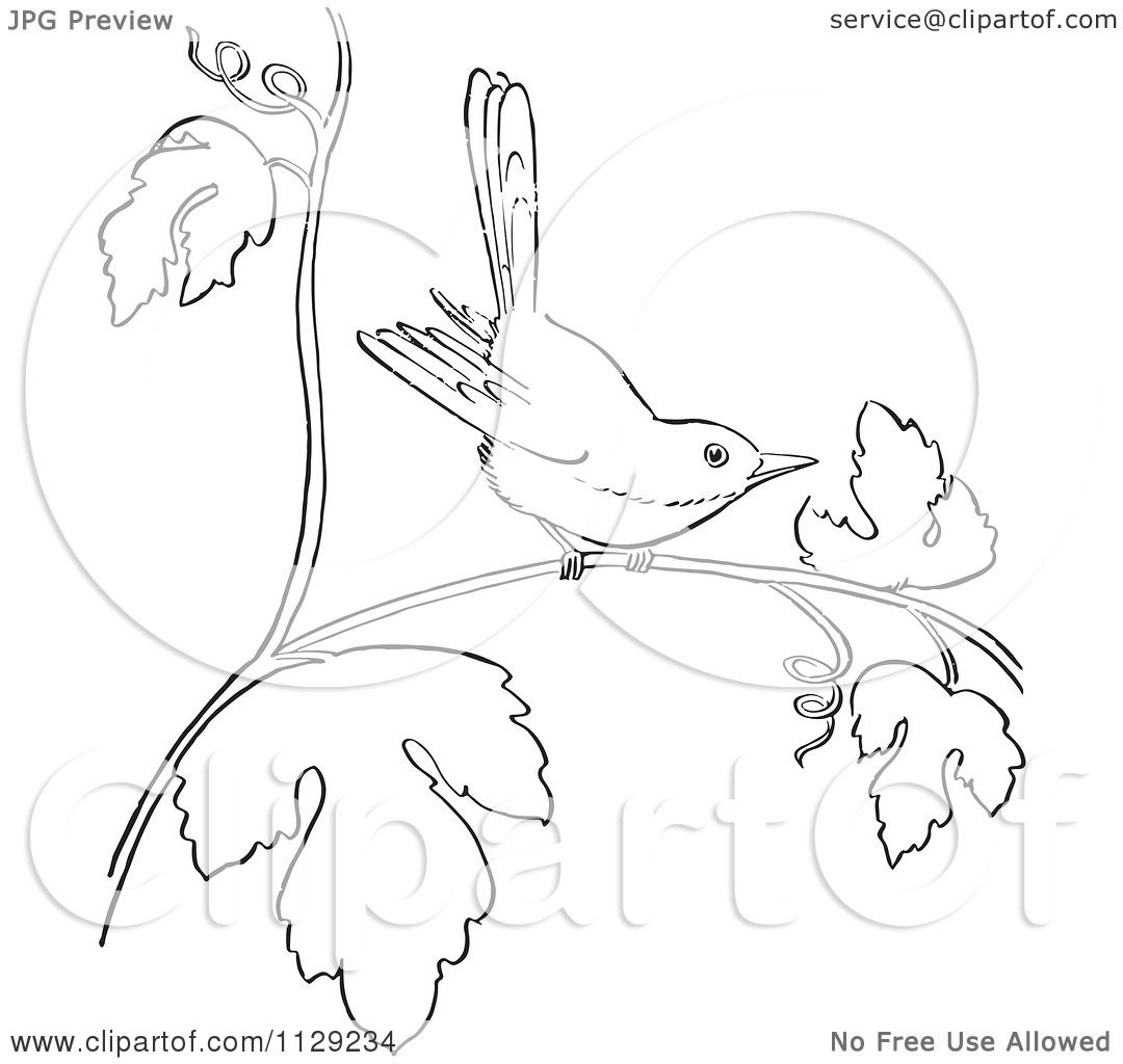 cartoon clipart of an outlined wren on a branch black and white