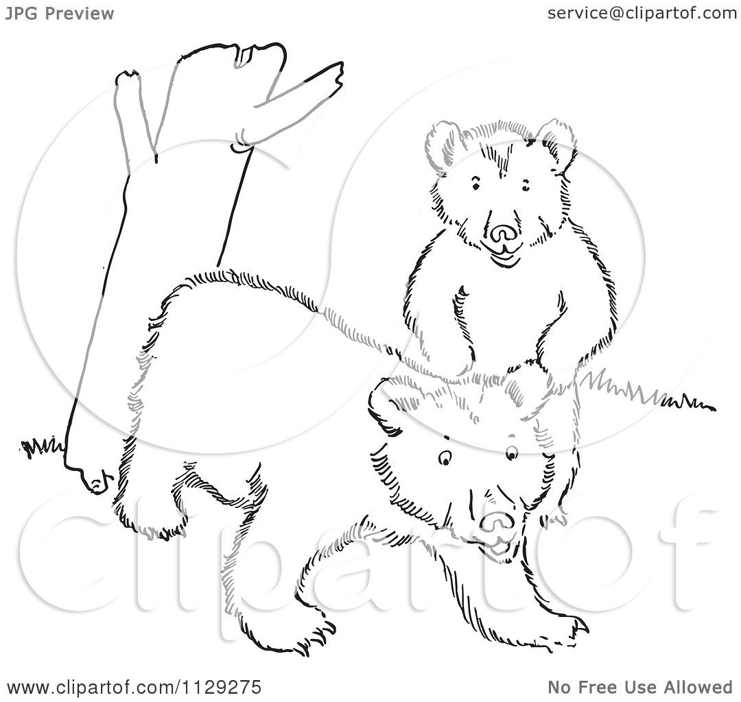 Bear Cub Tree Coloring PageCubPrintable Coloring Pages Free Download