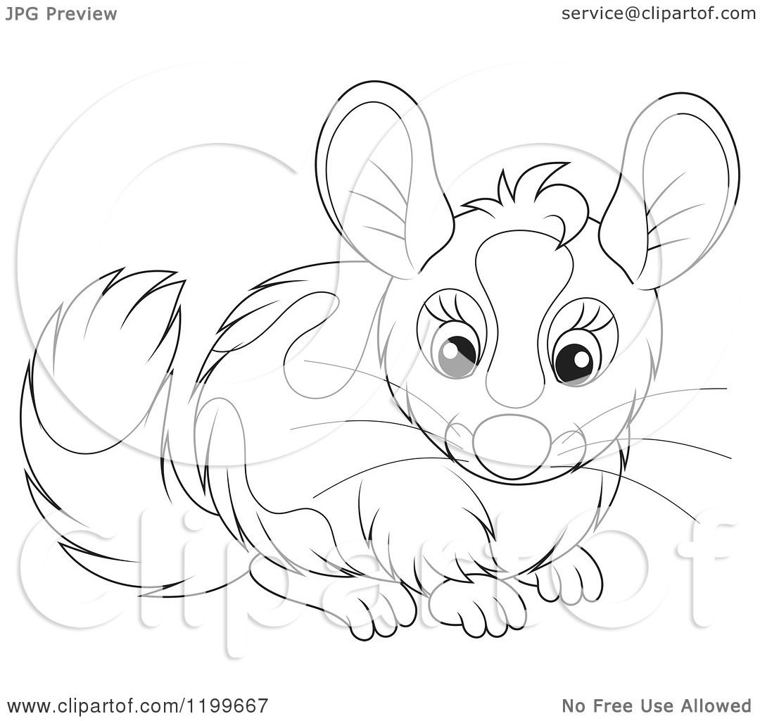 Cartoon Of A Black And White Cute Chinchilla Royalty