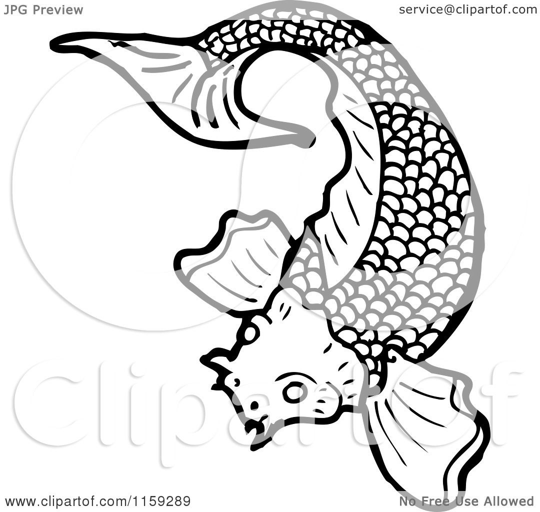 Black White Koi Fish