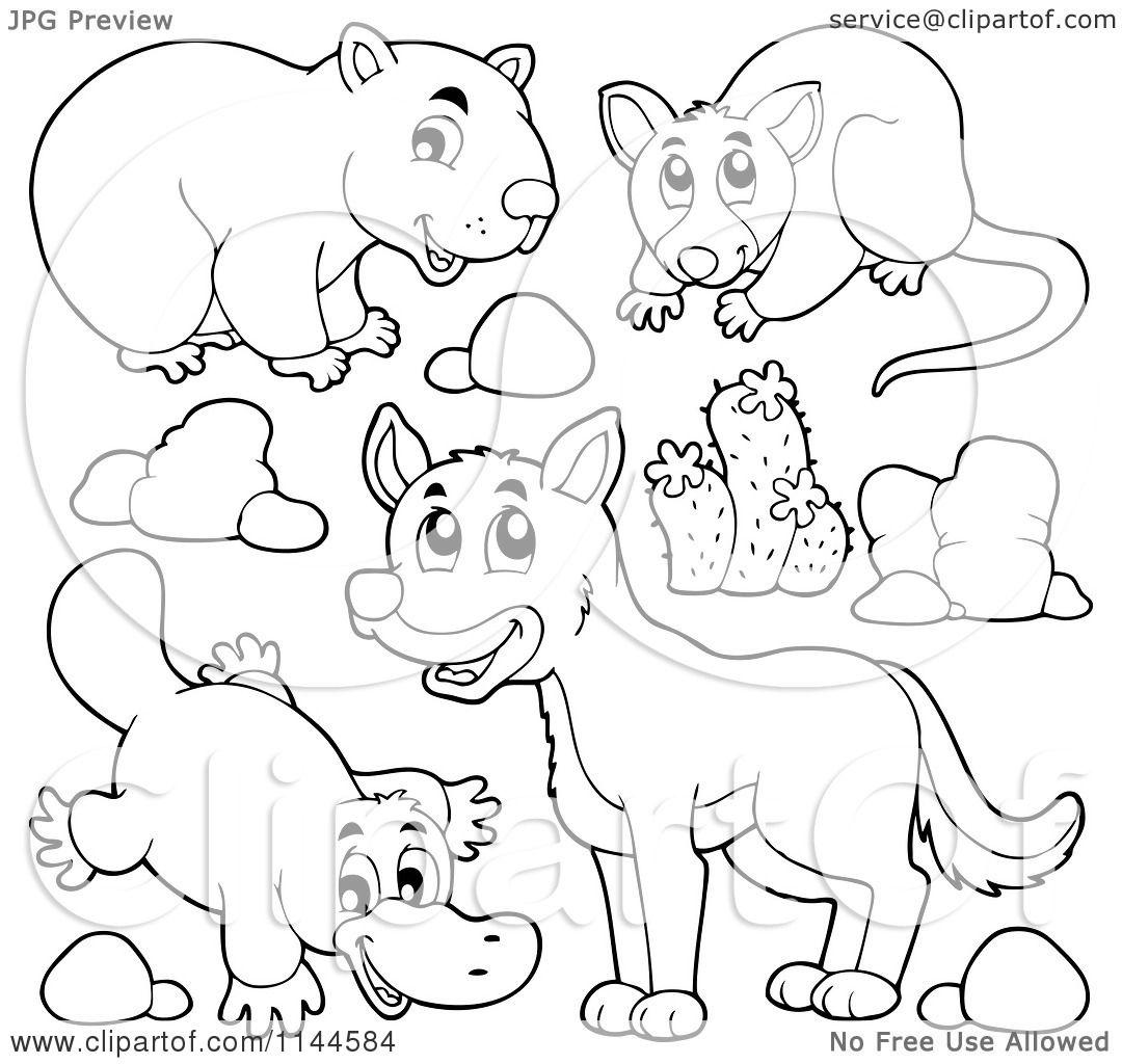 Coloring Pages Wombat Coloring Page wombat coloring page futpal com cartoon of a cute black and white aussie dingo platupus and