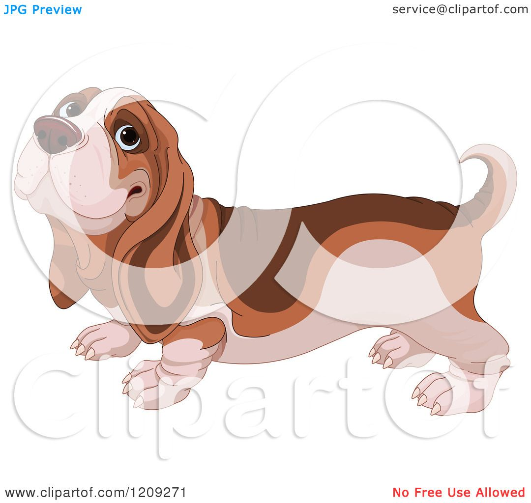 Cartoon of a Cute Happy Basset Hound Dog - Royalty Free Vector ...