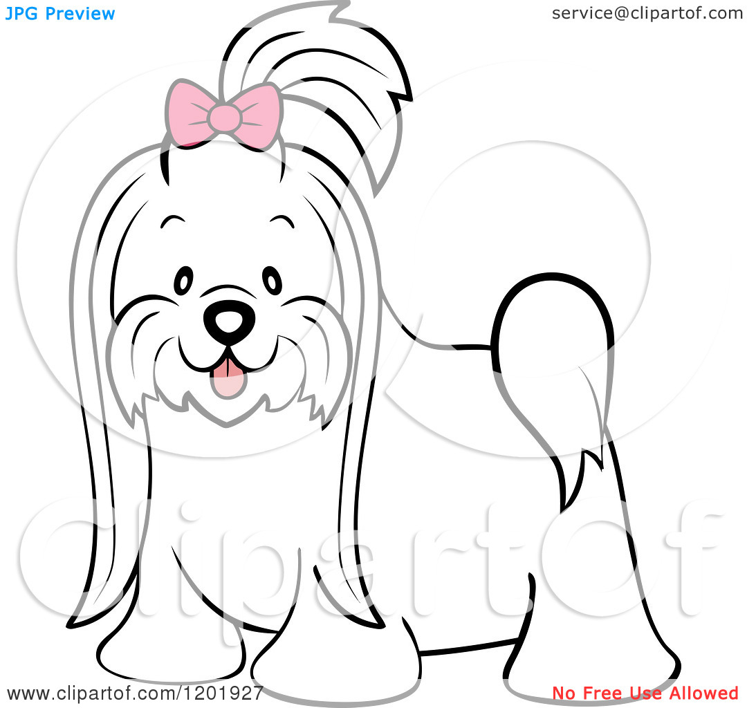 maltese dog clipart - photo #43