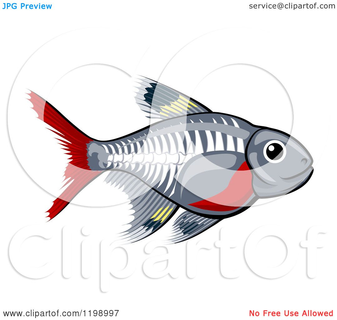 X-ray Tetra Drawings Cartoon of a Cute X-ray Tetra