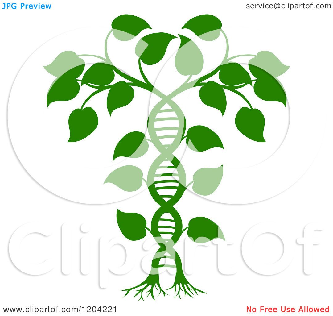 Cartoon Of A Green Dna Double Helix Plant Royalty Free