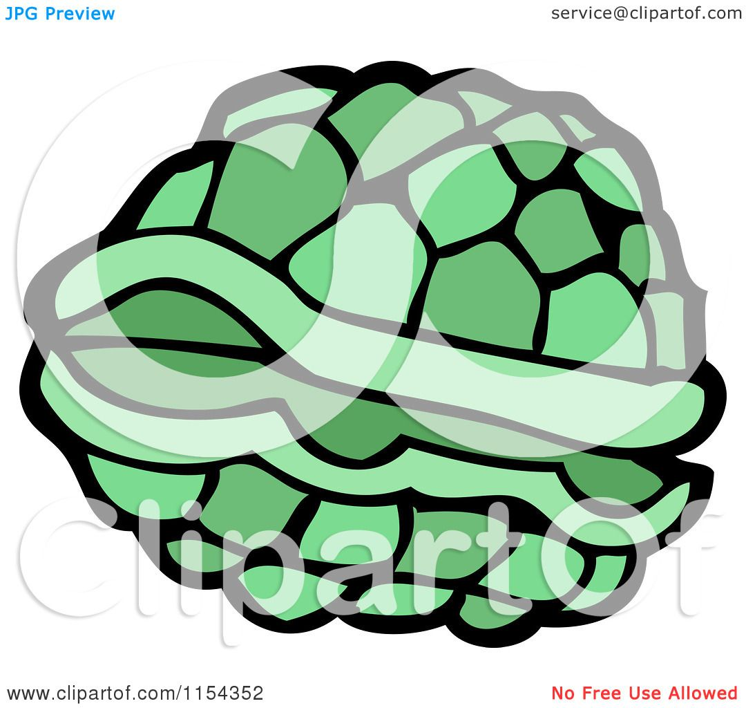 Turtle Shell Vector Turtle Shell Royalty