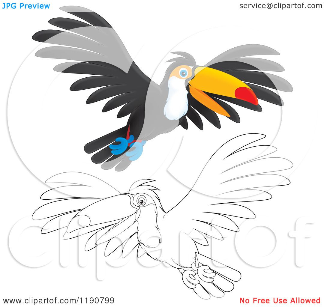 Clipart of a Sketched Perched Toucan Bird  Royalty Free