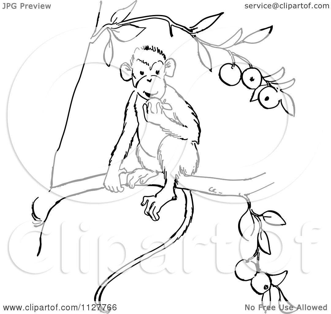 Cartoon Of A Retro Vintage Black And White Monkey Eating Fruit In A Tree Line Drawing Royalty Free Vector Clipart By Picsburg 1127766 50,000+ vectors, stock photos & psd files. white monkey eating fruit
