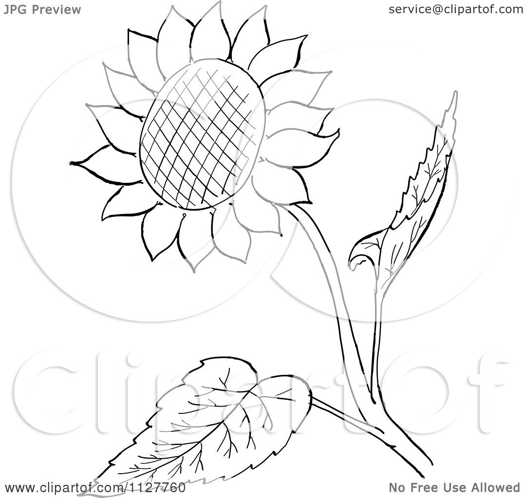 Outlined Tea Cup With A Spoon Bag And Saucer 1092354 likewise Ruler Karl Addison besides Black And White Flying Tennis Ball 2 1205500 furthermore Seamless Background Pattern Of Black Music Notes 1409379 likewise Retro Vintage Black And White Sunflower And Leaves Line Drawing 1127760. on how large is 4 centimeters
