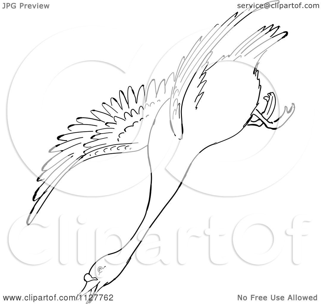 Aninimal Book: Cartoon Of A Retro Vintage Black And White Swan Descending ...