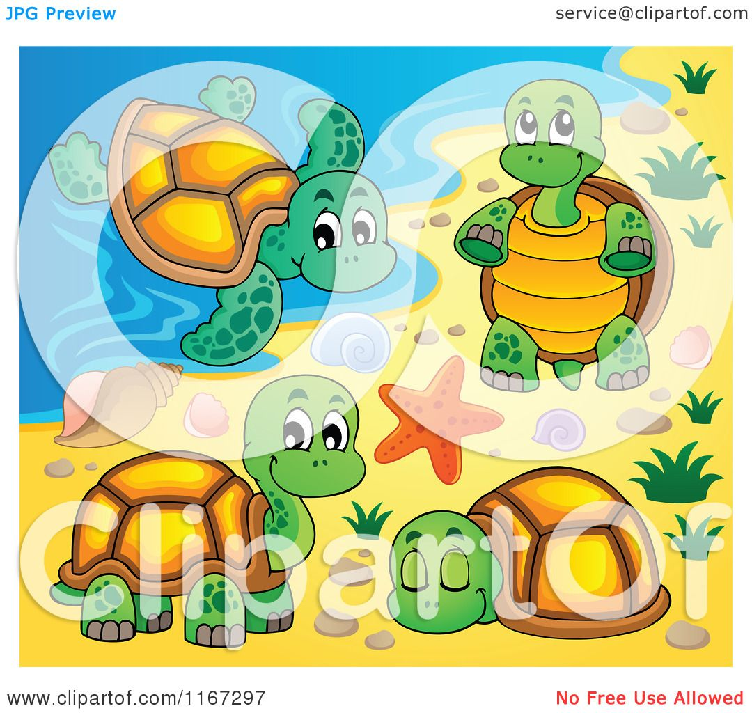 Cartoon of a Sea Turtle and Tortoises