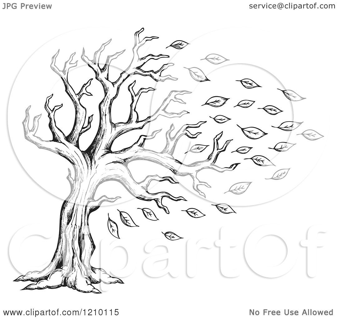 Black And White Leaves Pictures Images amp Photos  Photobucket