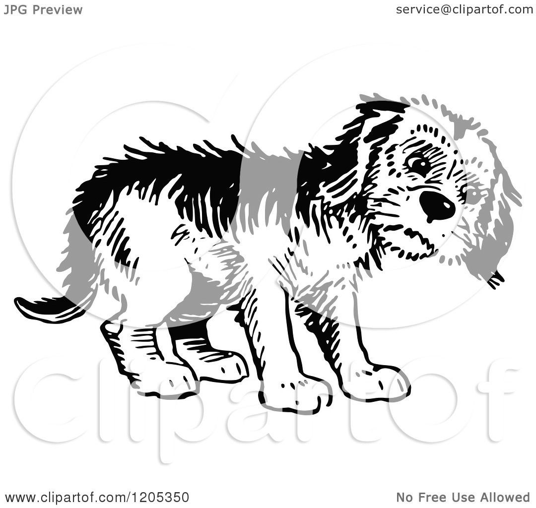 Cartoon Of A Vintage Black And White Forlorn Dog Royalty