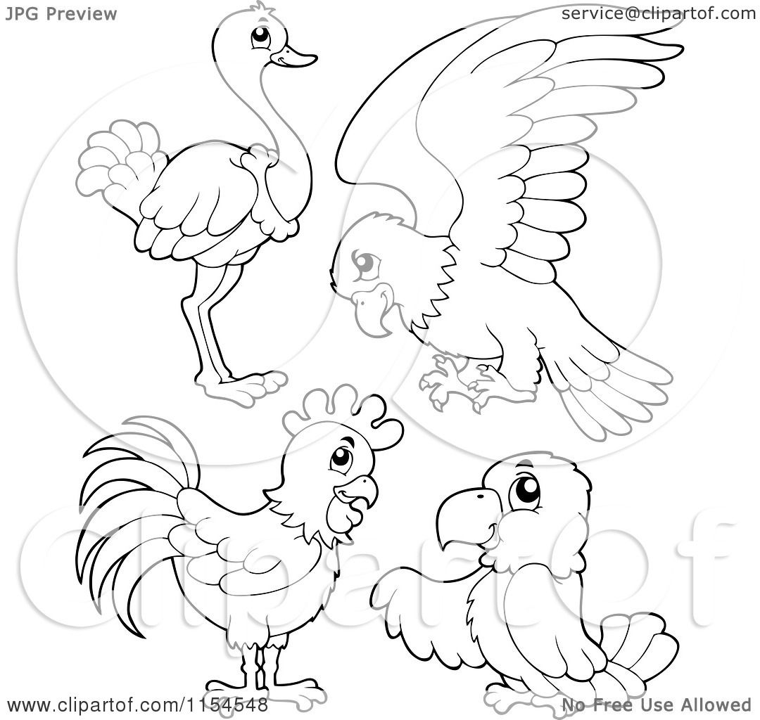 cartoon of an outlined ostrich parrot chicken and parrot royalty