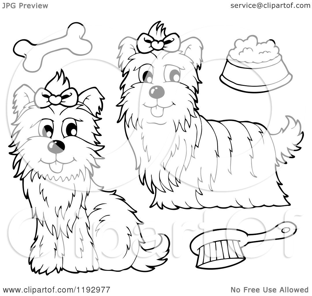 yourkie doags coloring pages | Cartoon of Black and White Yorkie Dogs with a Brush Bone ...