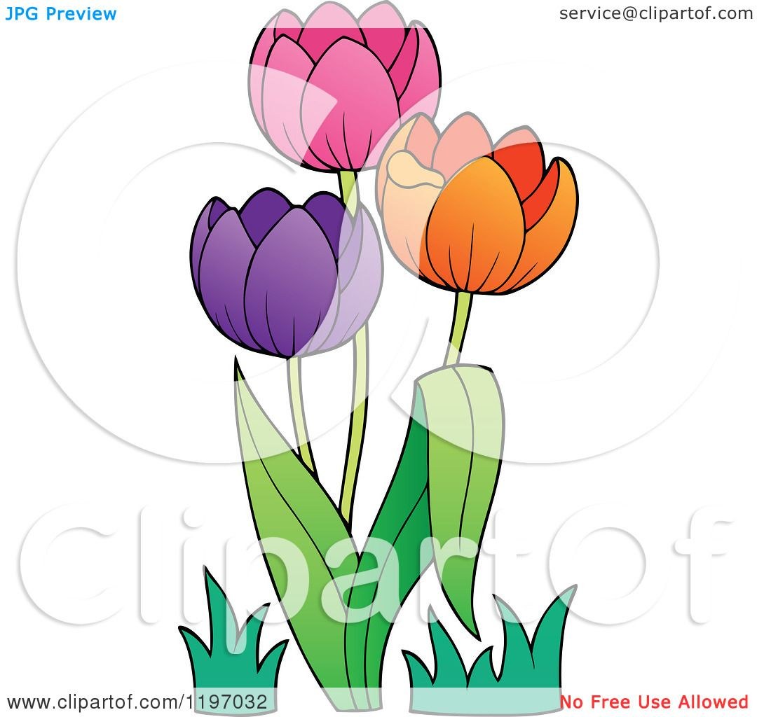Cartoon of Colorful Tulip Flowers - Royalty Free Vector ...