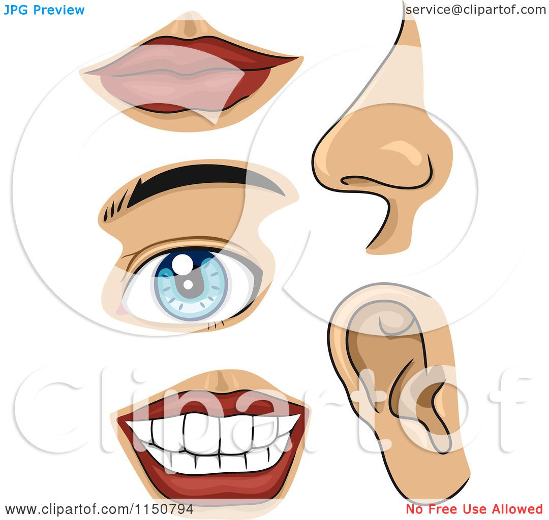 Cartoon of Facial Body Parts - Royalty Free Vector Clipart by BNP ...