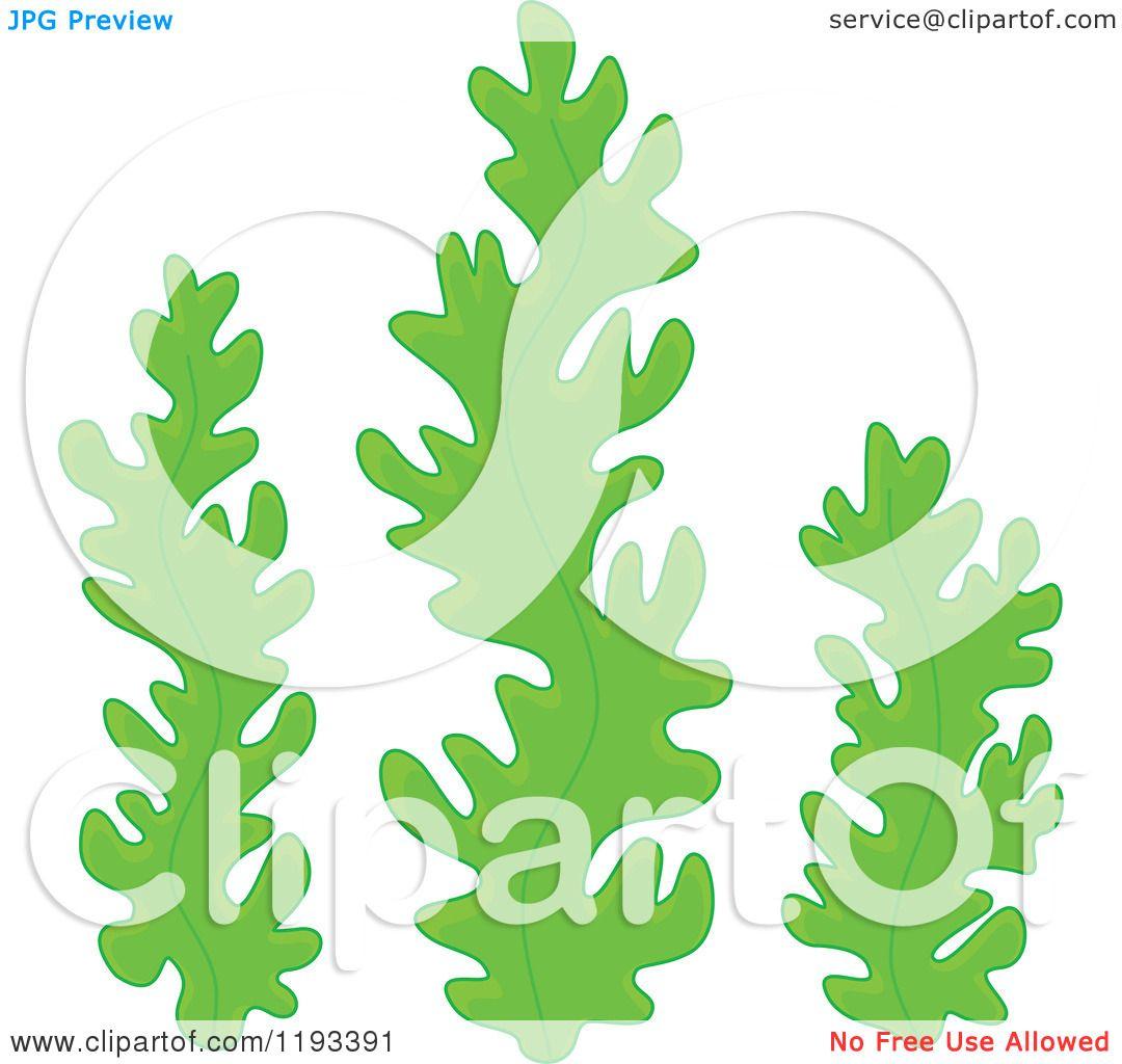 Cartoon Seaweed Clipart Cartoon of Green Seaweed