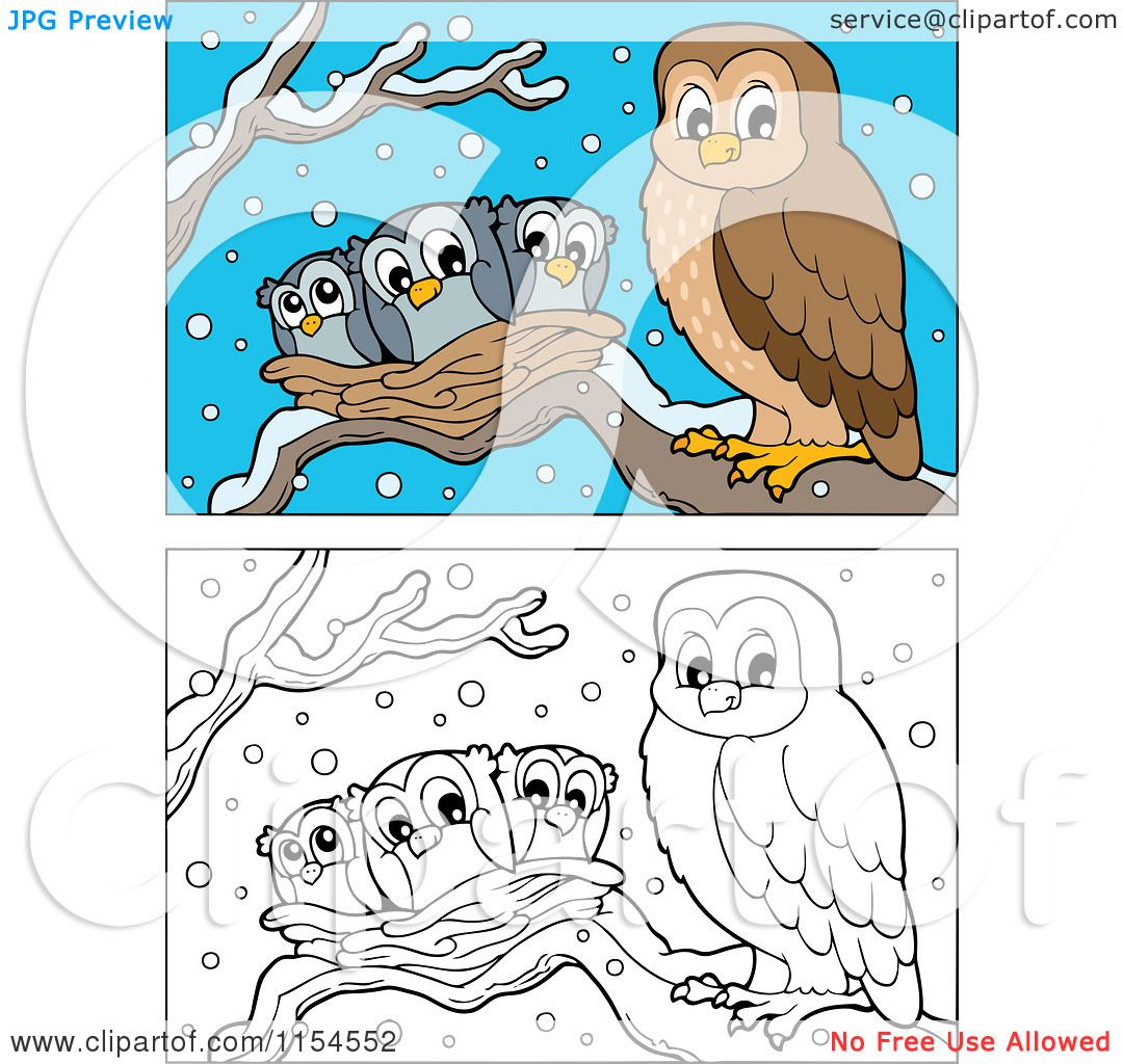 Cartoon Of Outlined And Colored Owl And Chicks In A Nest