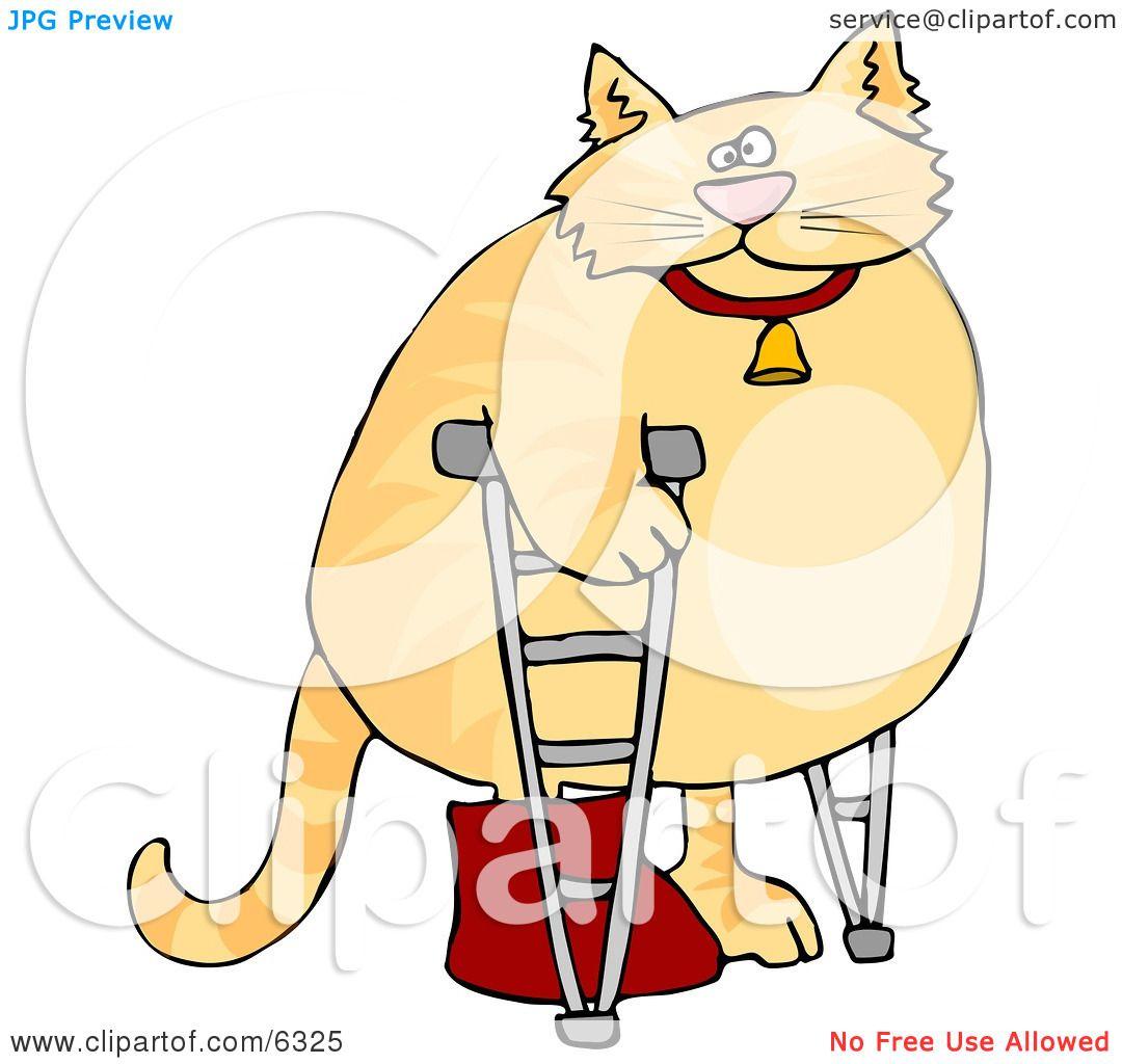 Chubby Orange Cat Walking On Crutches In A Hospital One