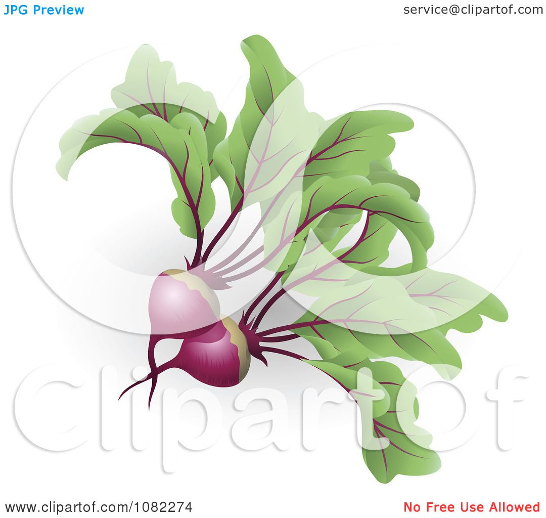 free clipart beets - photo #46