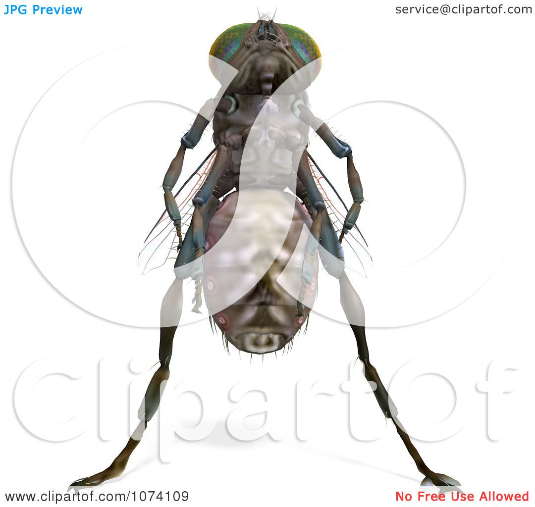 Clipart 3d Brown House Fly 1 - Royalty Free CGI Illustration by ...