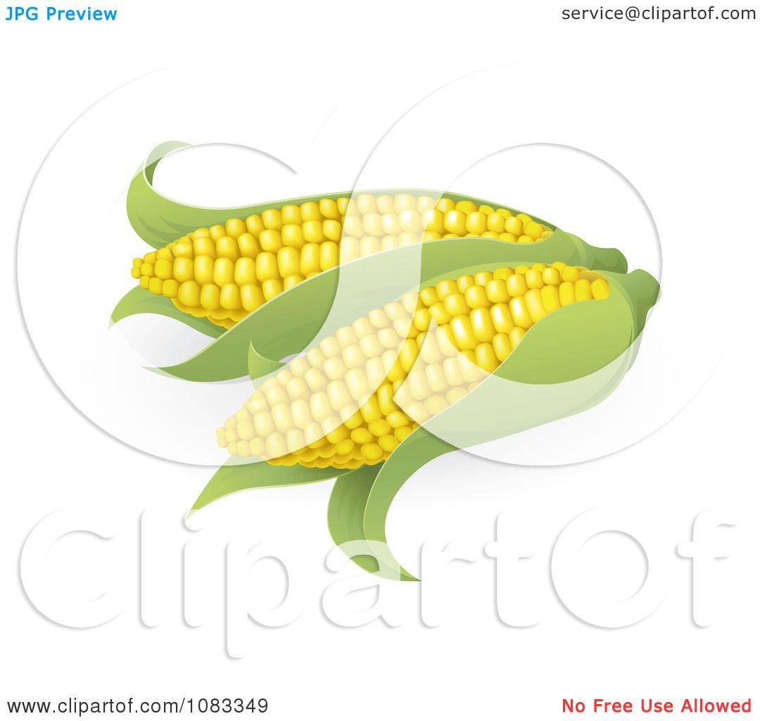 Ear Of Corn Drawing Clipart 3d ears of sweet corn