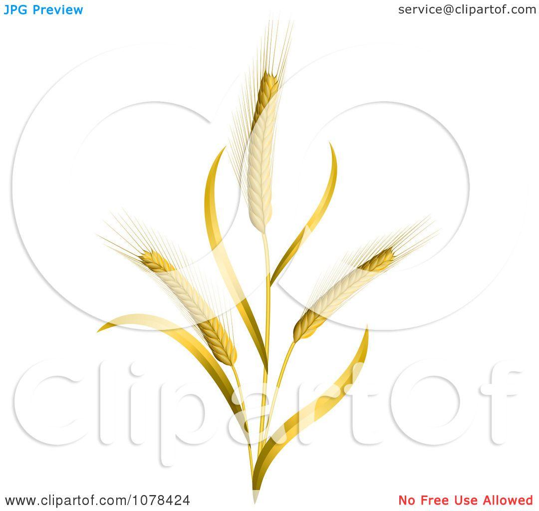 Of Wheat Stalks - Roya...