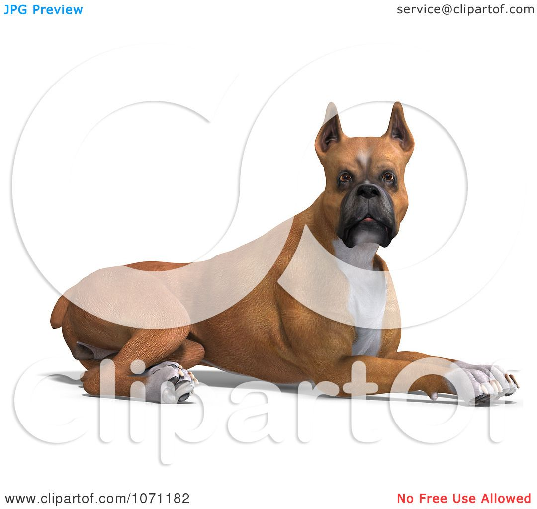 Clipart 3d Fawn And White Boxer Dog Resting - Royalty Free CGI ...